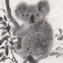 コアラはがき